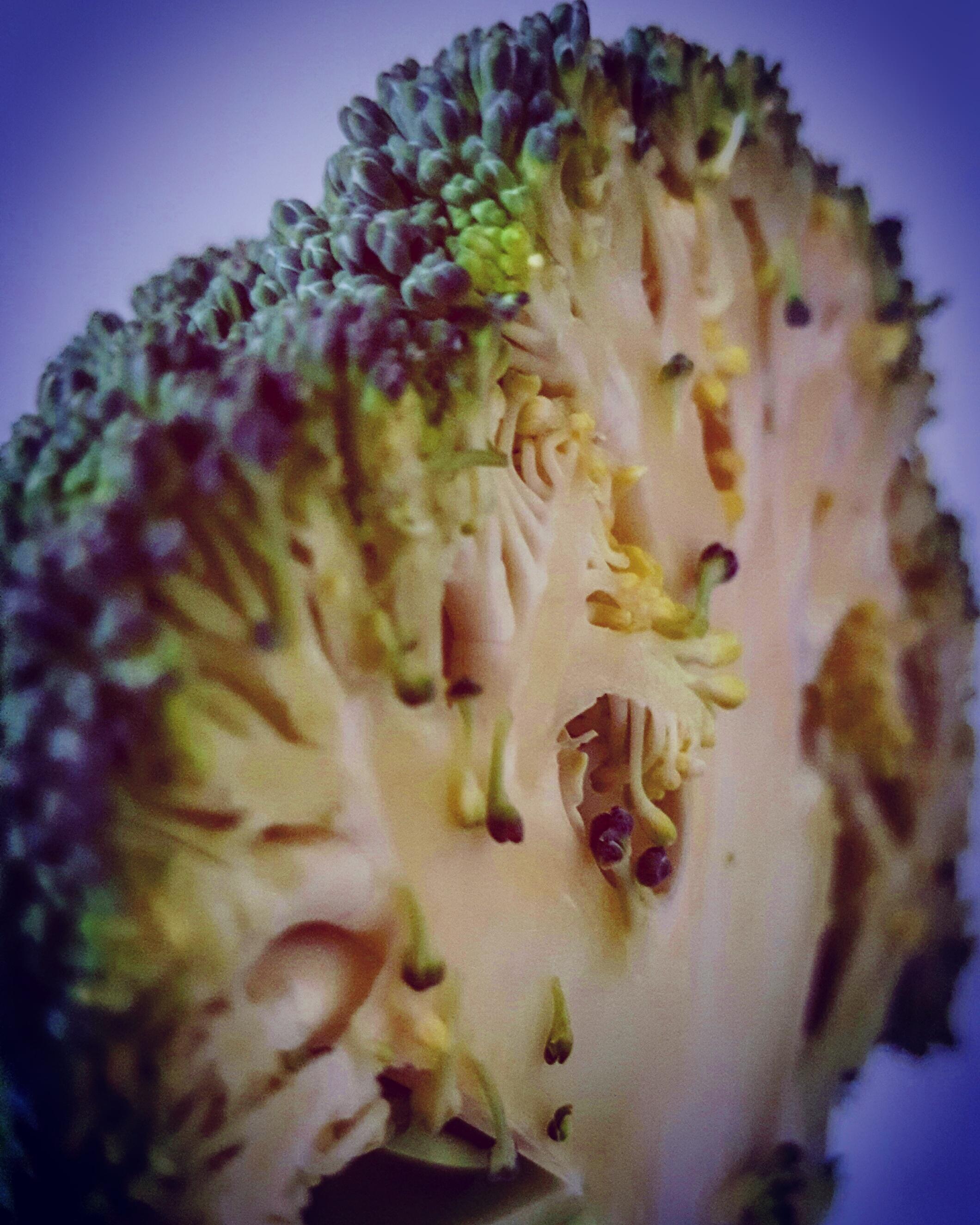 Brocoli Brain
